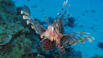 Sataya Reef